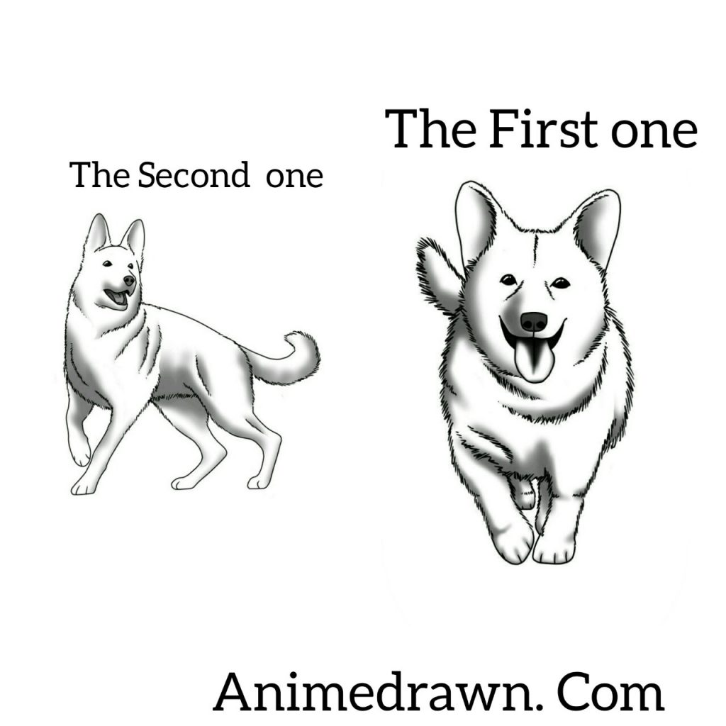 How to draw a dog realistic but easy