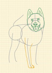 How to draw a cat and dog