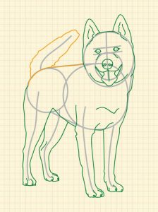 how to draw a realistic a cute dog